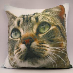tyynynpäällinen-kirjava-kissa