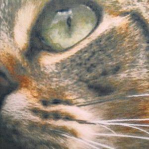 tyyynynpäällinen-kirjava-kissa-lähi